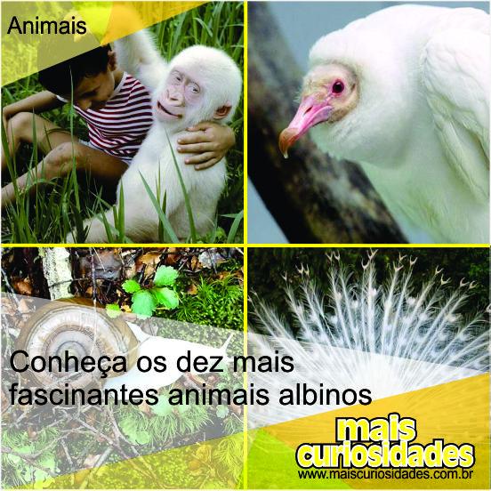 Conheça os dez mais fascinantes animais albinos http://ow.ly/OmrO3
