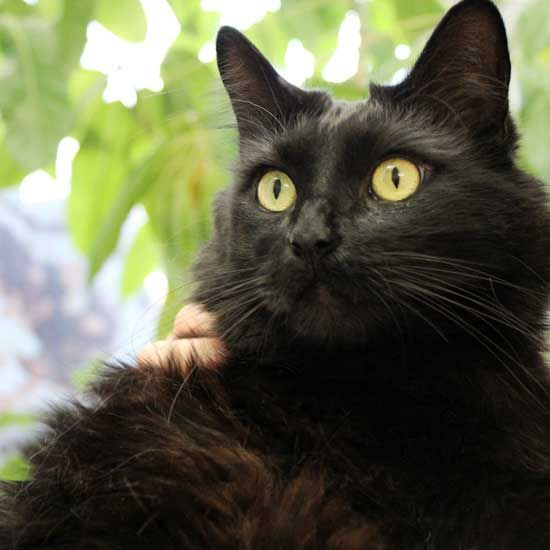 My Name Is Picasso And Like Every Cat In The World I M Considered A Work Of Art I M Up For Adoption Now Come Check Me Out Pet Adoption Animals Cat Adoption