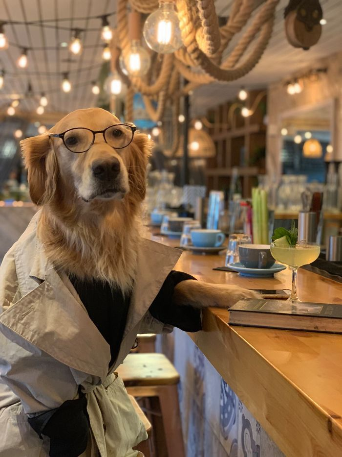 Photo of El fotógrafo crea la galería de imágenes más divertida con su perro.