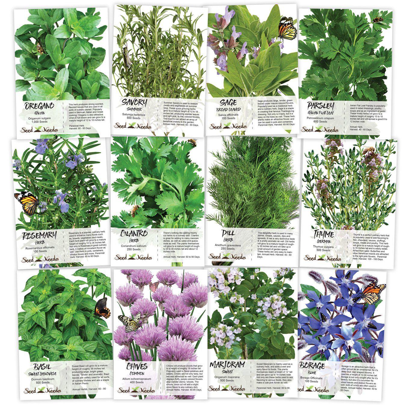 Sage Herb Seed 40 Seeds