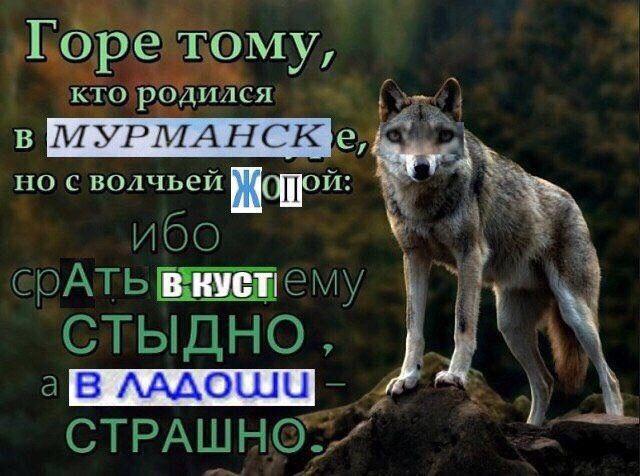 Пин от пользователя vadimislove_ на доске до связи (с ...