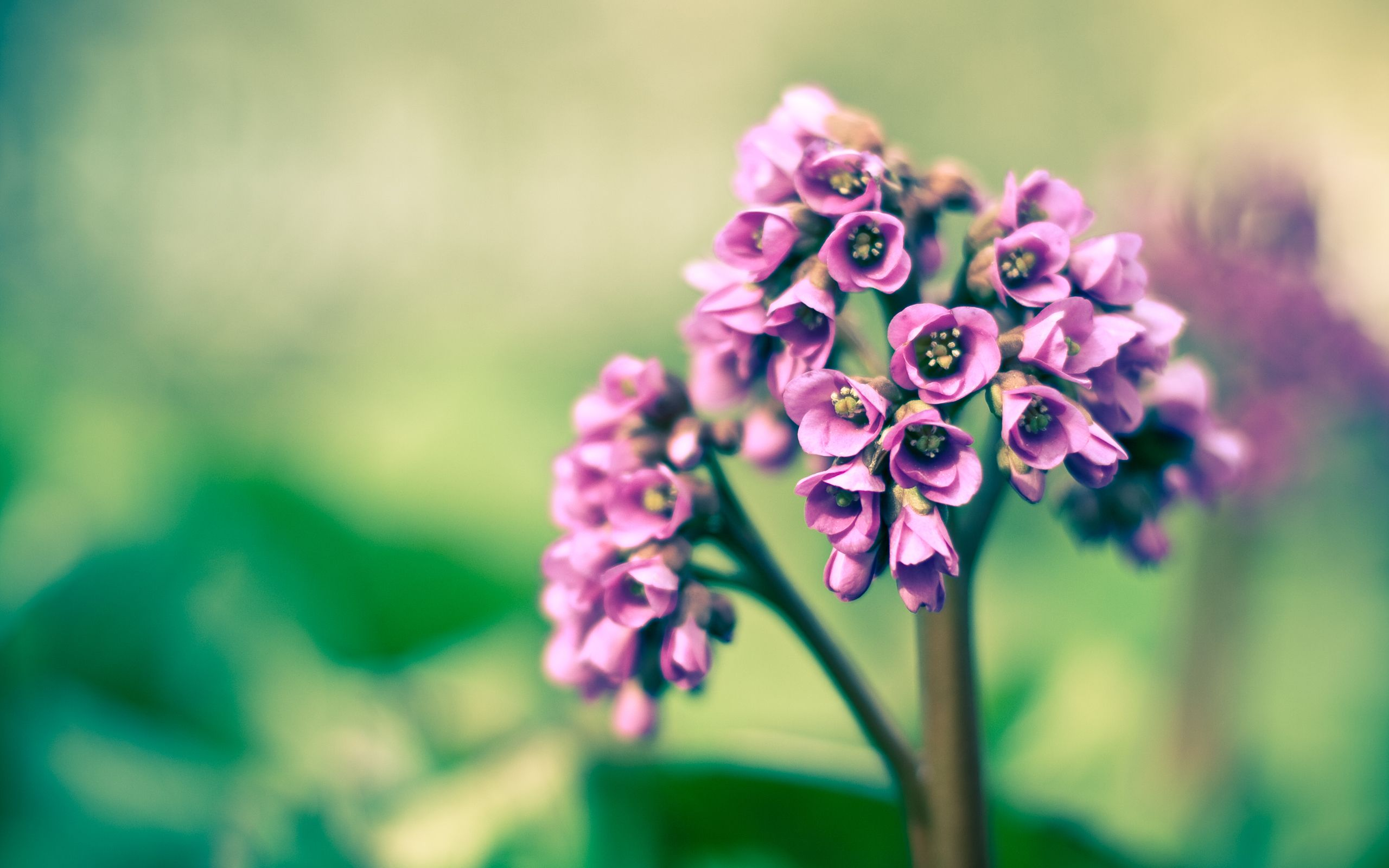 Beautiful Pink Flowers Hd Wallpapers Flower Photography Pinterest