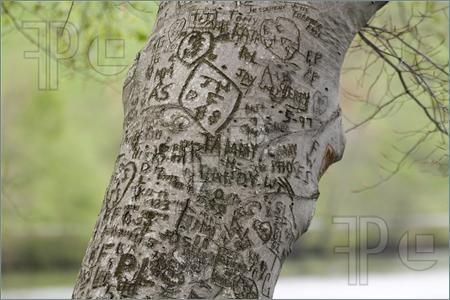 Tree graffiti