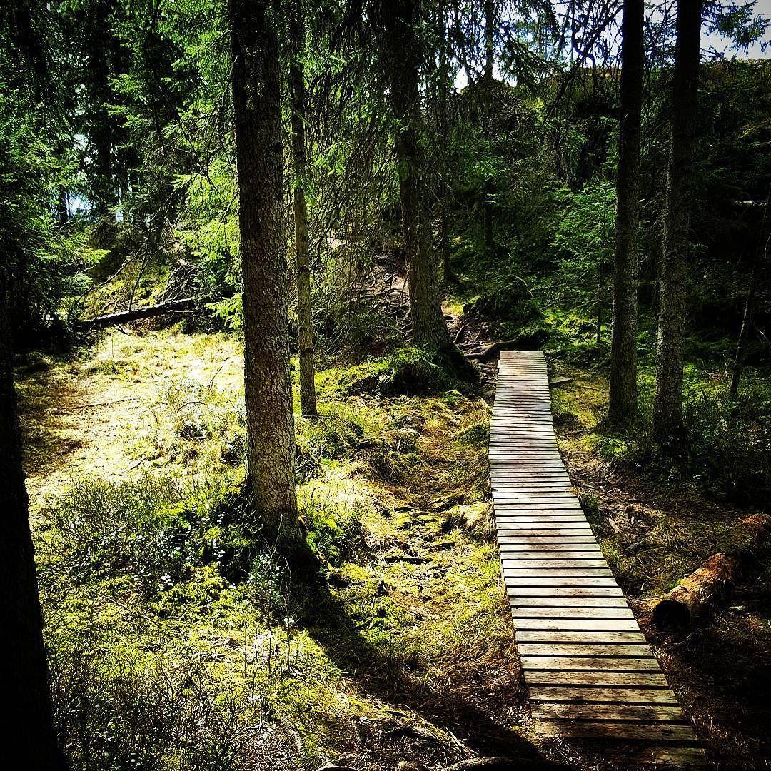 Flott i skogen i dag også selv om det snødde litt før og etter turen #topptur #utno #liveterbestute #mittnorge #hiking #randonee #ilovenorway #nature #mittfriluftsliv #spring #yrbilder #visitnorway #welcometonature #vår #natur #norsketurbilder #utpåtur #norge #norway #landscape #beautiful #turistforeningen #norrøna #tur  #bestofnorway #dreamchasersnorway #ilovenorway #ilovenorway_akershus #varden by heiped2