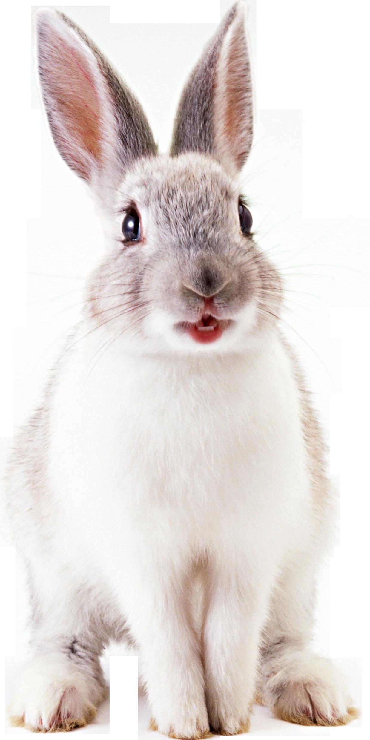Видео кроль секс дикий заец