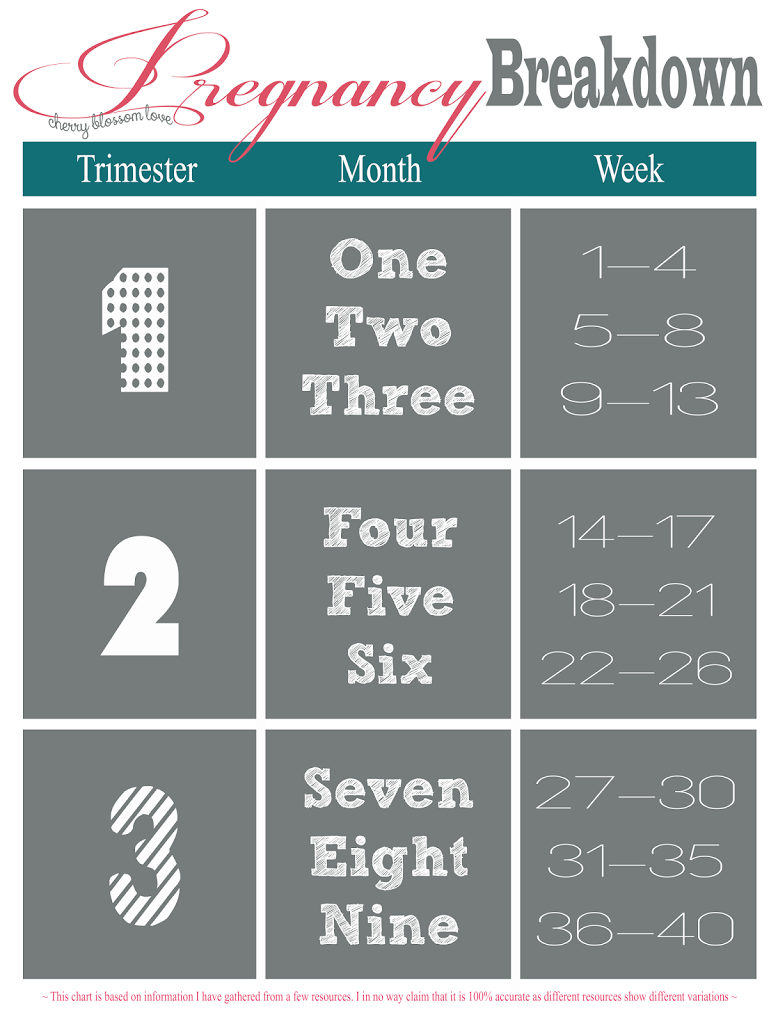 Pregnancy week month trimester chart momma to be pinterest