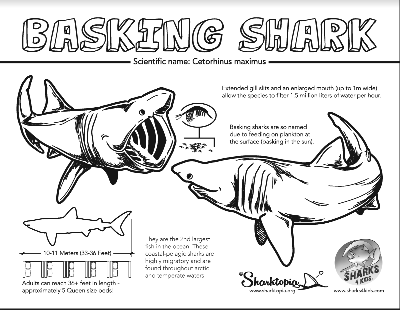 Learn all about basking sharks with our JAWsome coloring fact sheet.  Artwork from @Sharktopia | Shark, Shark activities, Basking shark