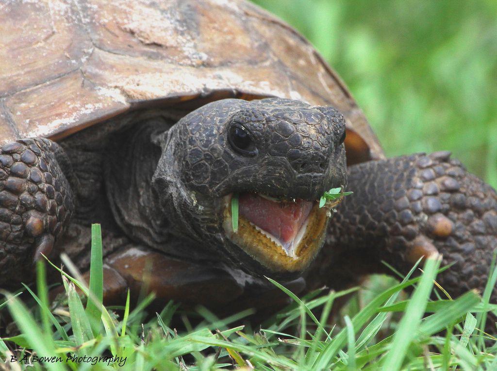 Image result for animals wildlife