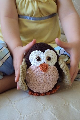 Baby Morepork Owl