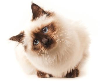 Cute Cats Cats, Crazy cats, Cats, kittens