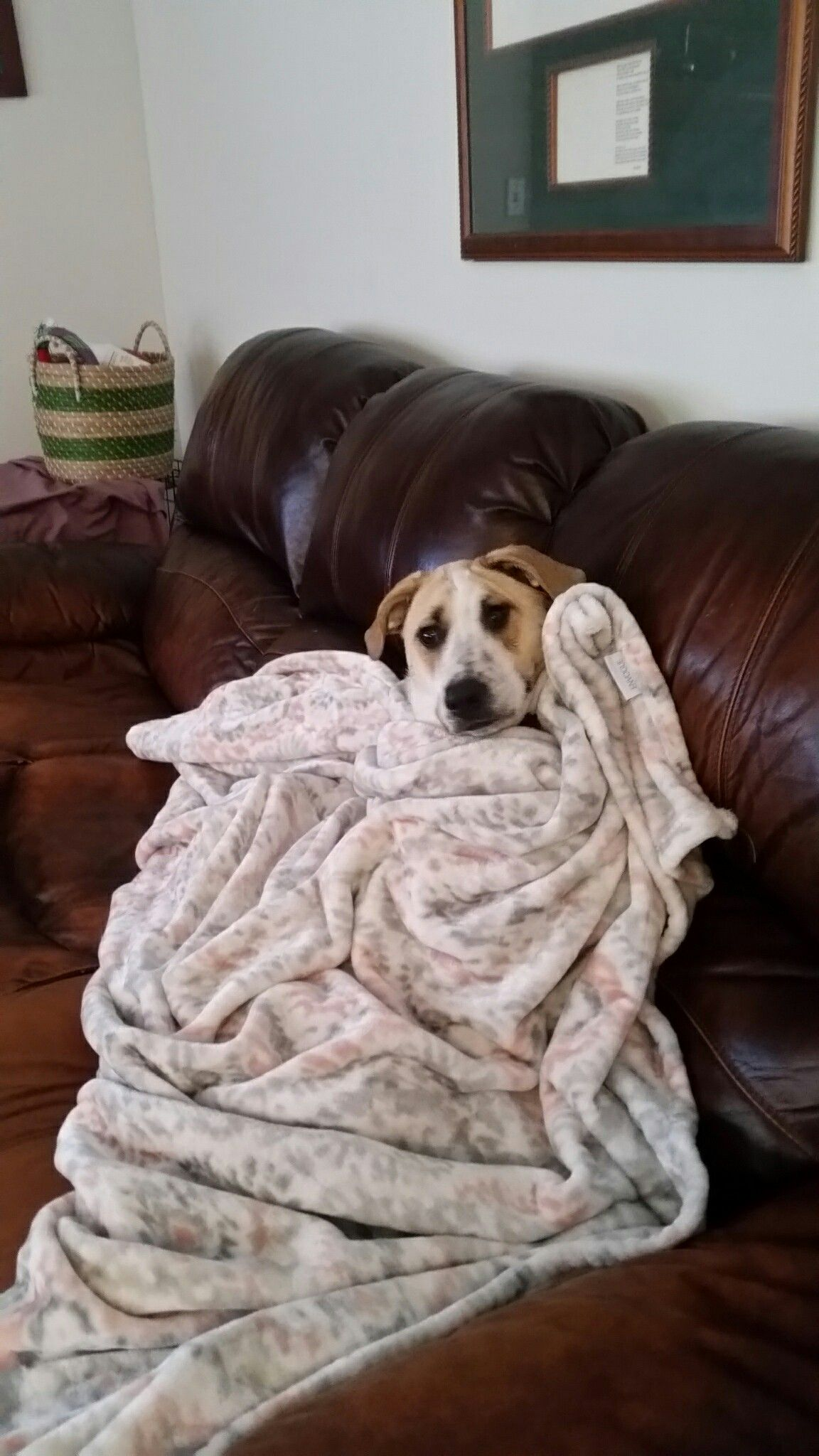 Pin by Marti Bea on love my dog I love dogs, Dogs, Blanket