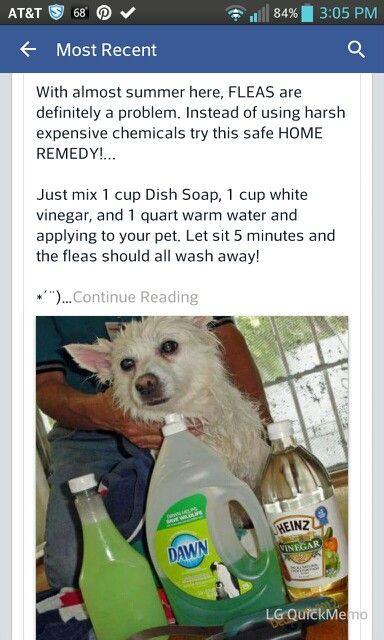 Flea Bath For Dogs Cup Of Vinegar Cup Of Dawn Quart Of Warm