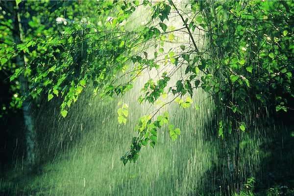 rain makes everything so greeeeen
