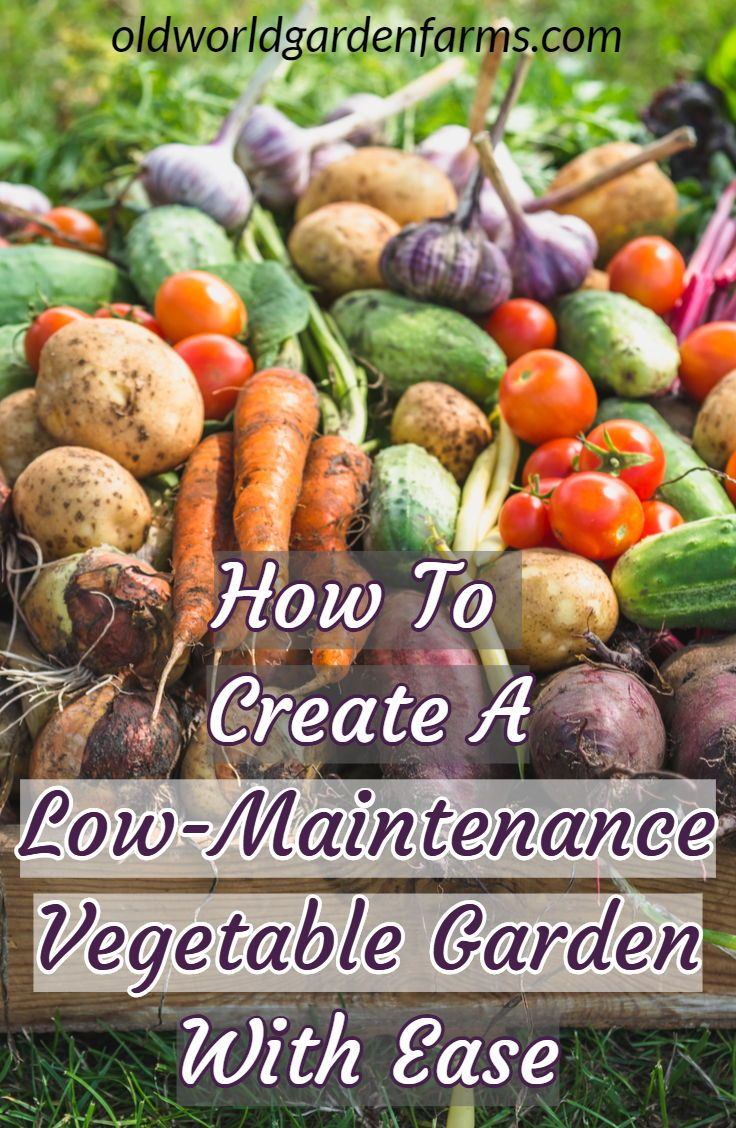 Photo of So erstellen Sie einen einfachen, unkrautfreien und pflegeleichten Gemüsegarten