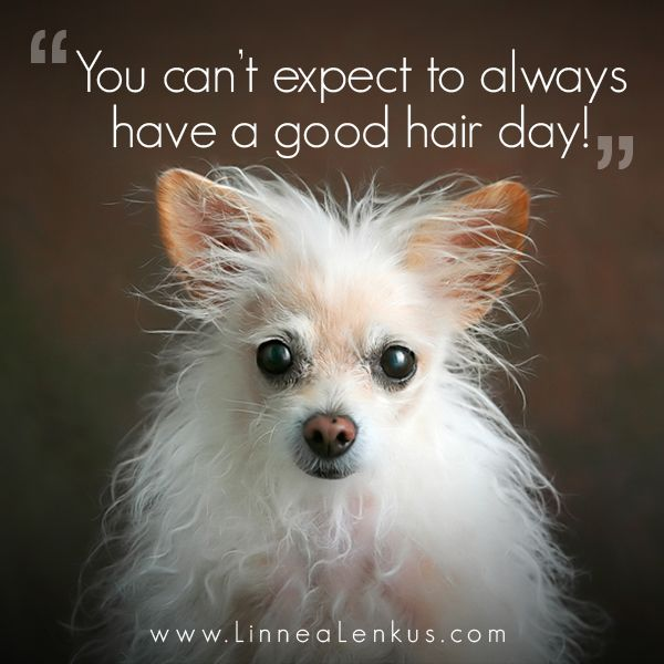 Not A Good Hair Day Inspirational Quote Hair Quotes Funny Hair Quotes Dog Quotes Funny