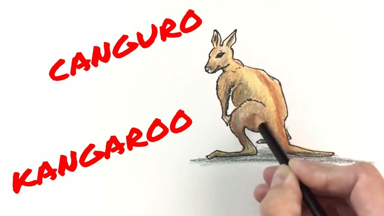 Como Dibujar Un Canguro Facil How To Draw And Color A Kangaroo For Kids Como Dibujar Animales Dibujos De Animales Como Dibujar