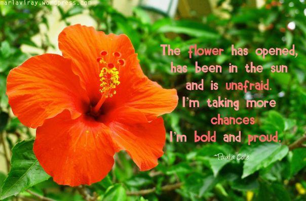 Gumamela Flower Quotes Flowers Gumamela