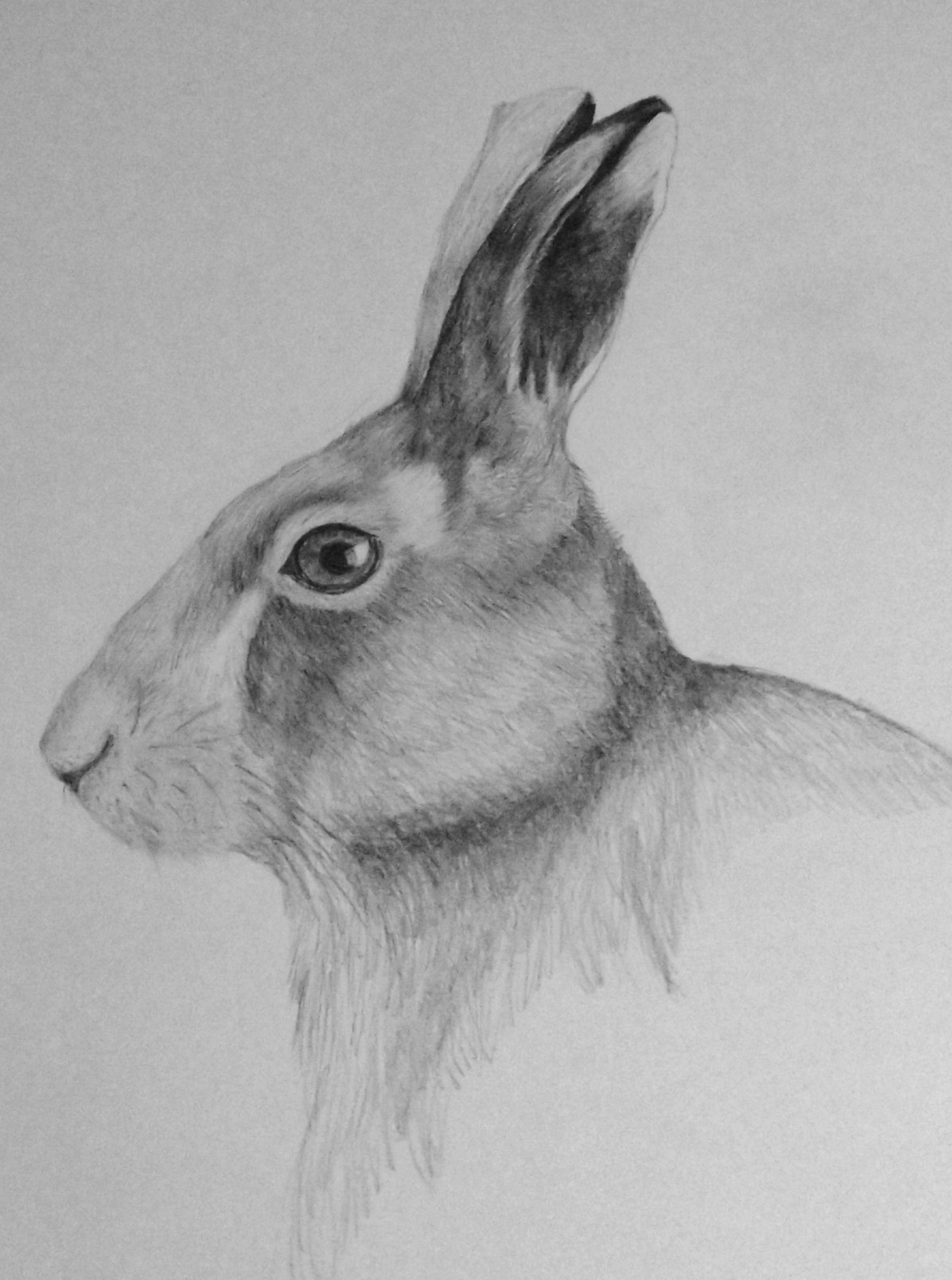 Hare in Pencil by Audrey Haney