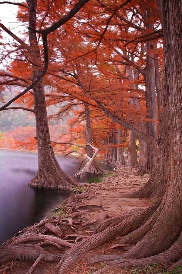 Misty Fall Morning | A1 Pictures | Leona Likes | Pinterest ...