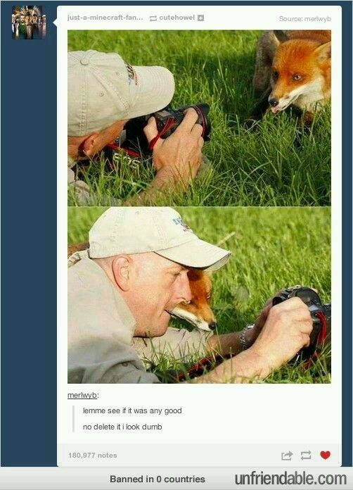 Helpful fox is helpful.