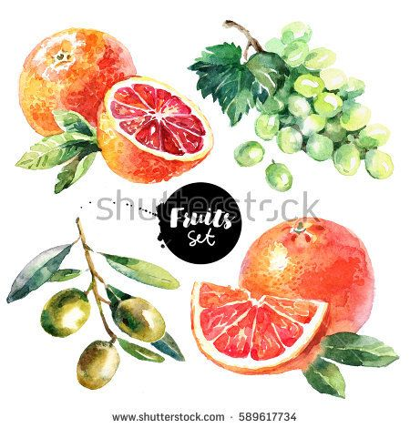 Watercolor grapefruit, grapes, olives, blood orange fruits and vegetables set. Painted isolated natural organic fresh eco food illustration on white background