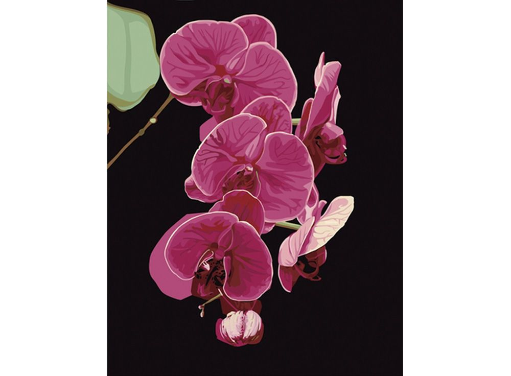 Картина по номерам «Утонченность орхидеи»   Картины ...