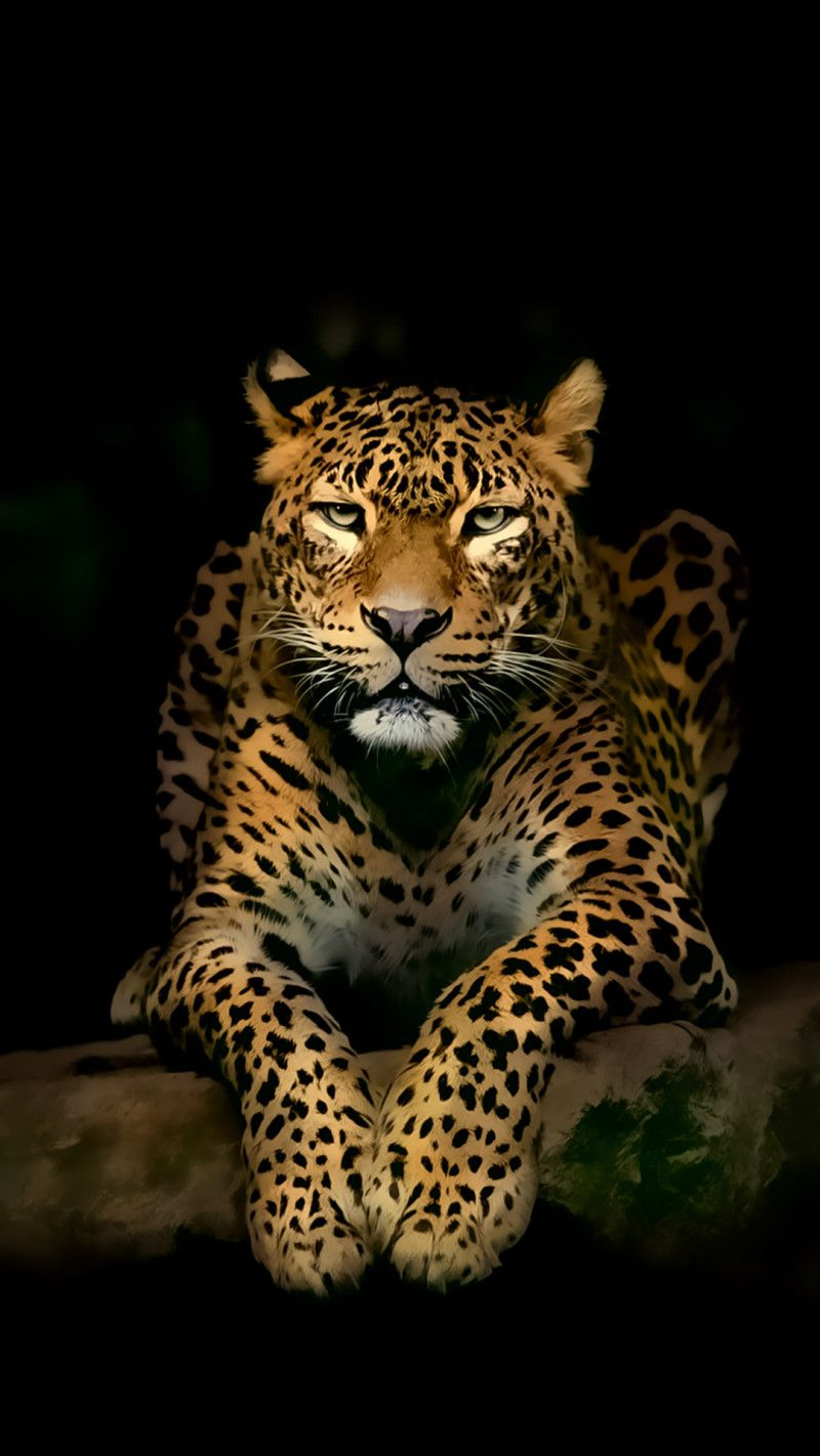Leopard iPhone Wallpapers (With images) Wild animal