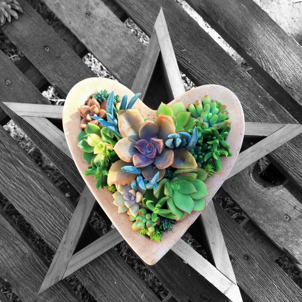 Santa Barbara Succulent Art — Succulent Dish Gardens