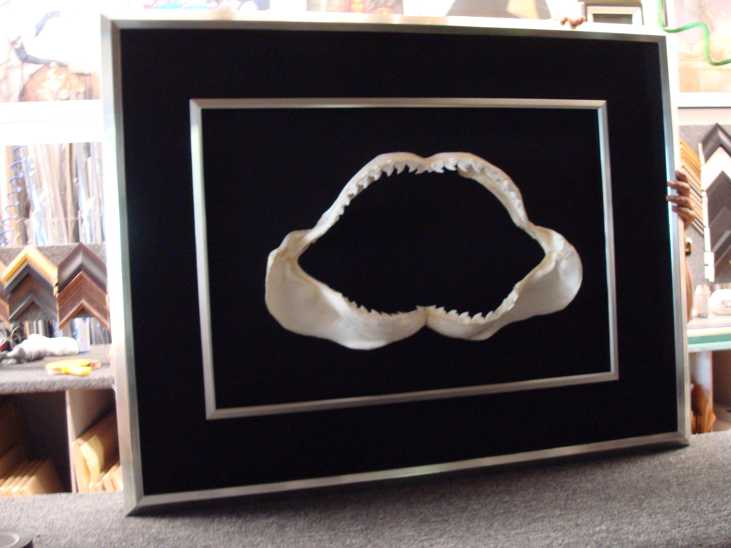 double frame shark jaws - Double Frames