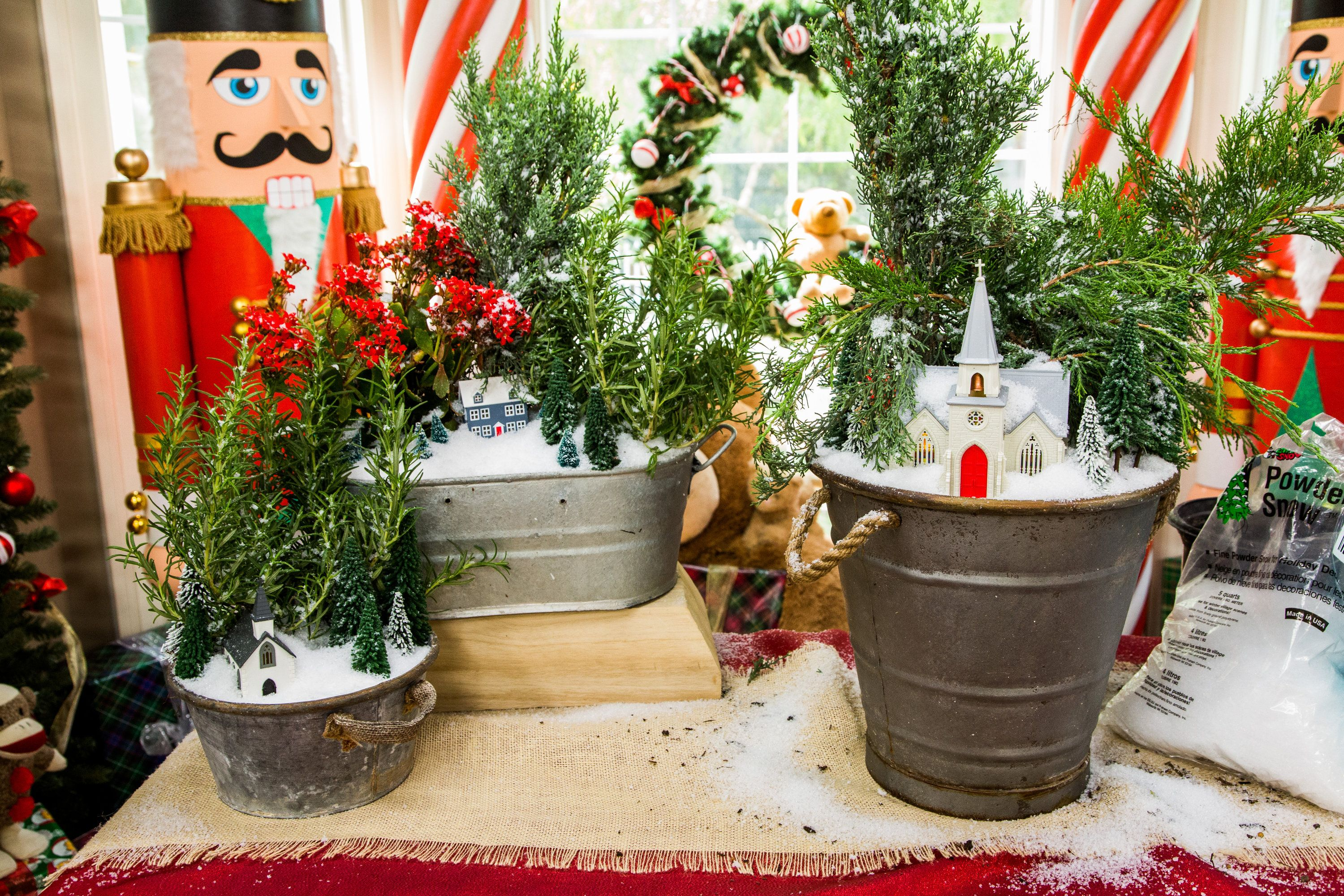 Ken Wingard has a DIY that includes Christmas and plants! DIY ...
