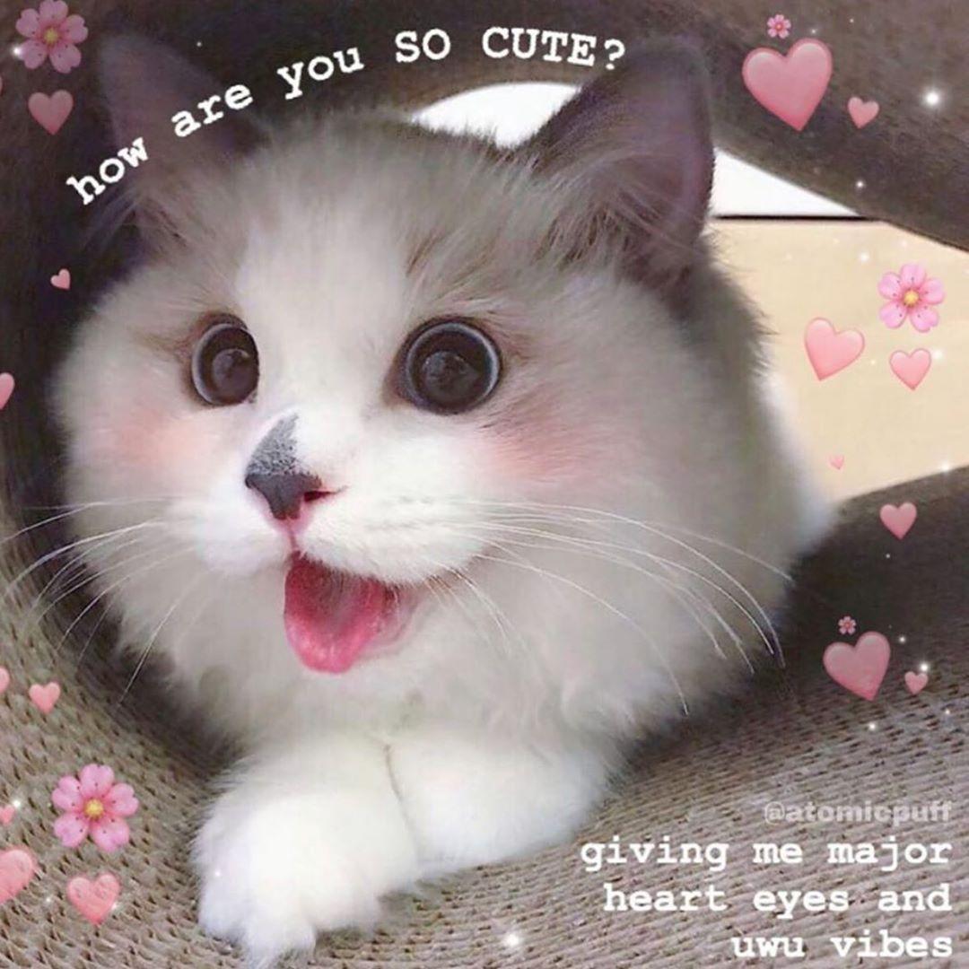 So Surprised 0 Cute Love Memes Cute Cat Memes Cute Memes