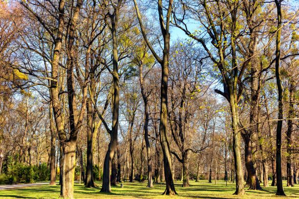 trees in a park before spring and sunny day