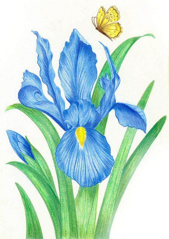 Blue Iris Butterfly