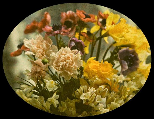 vintage everyday: Early Autochrome Photography – Beautiful Color Photos of Natural Flowers from between the 1900s-20s
