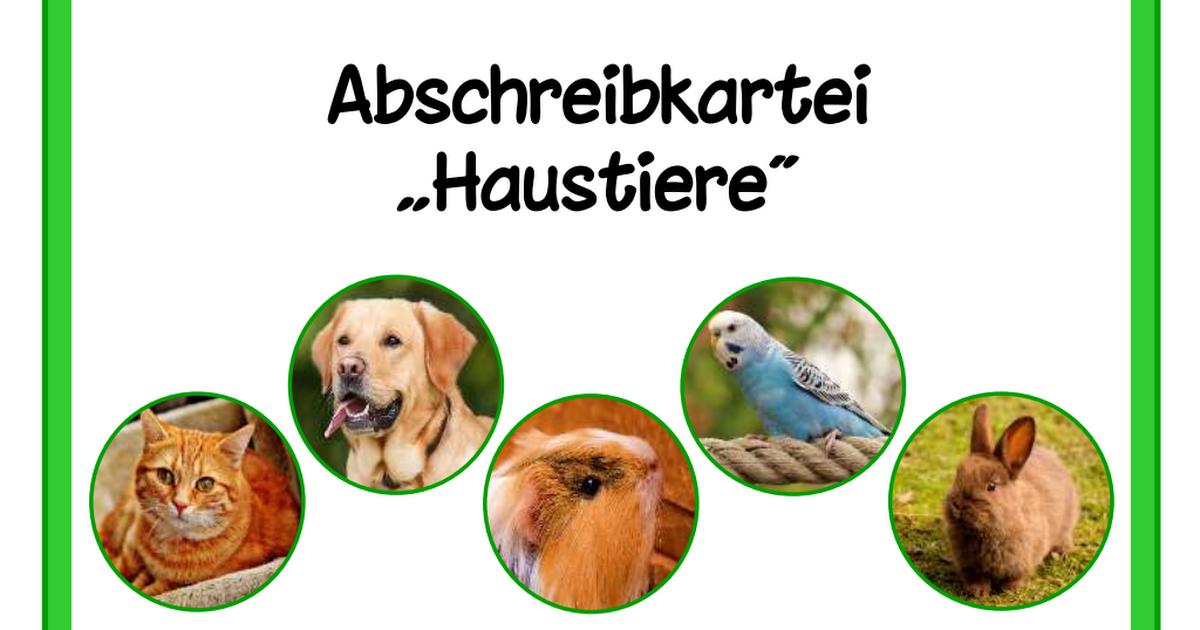Alles Uber Deinen Hund So Sorgst Du Fur Dein Lieblingstier Kinderbuch Detektive In 2020 Kinderbucher Bucher Horbucher Kinder