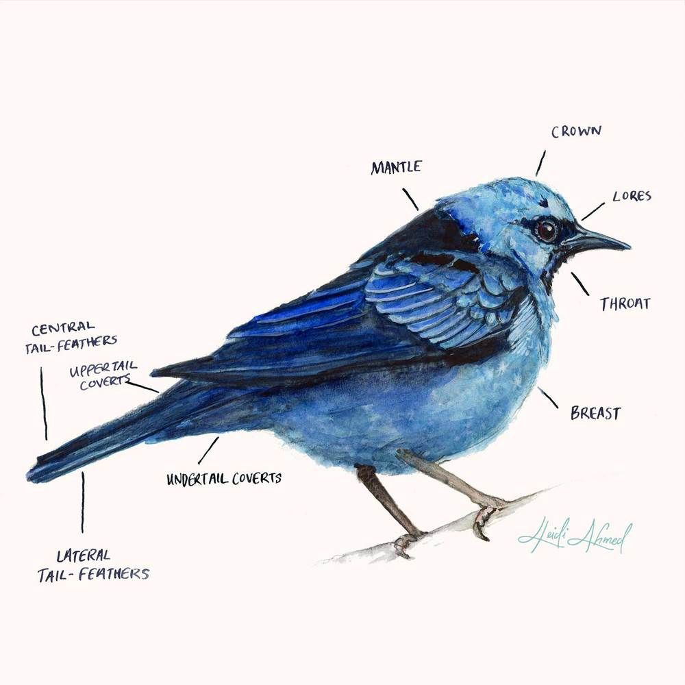 House-of-Watercolor-Connect-Home-Page-Image.png   Birds n funnies ...