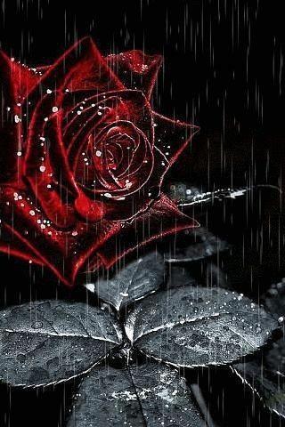 Черная роза картинка анимация