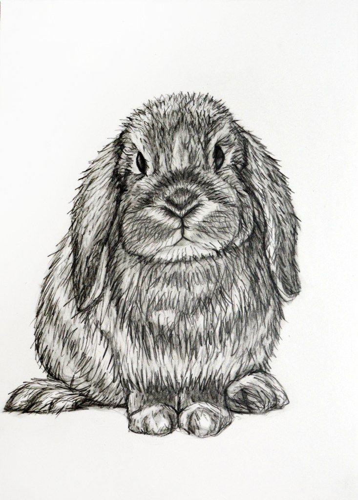 Bunny Rabbit Pencil Drawing Pencil Drawings Pencil Drawings