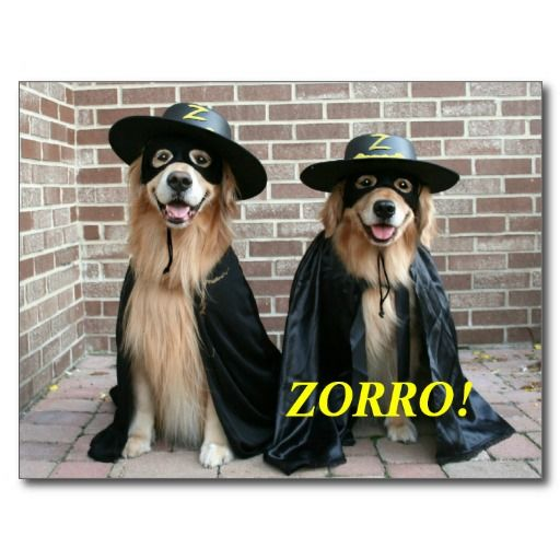 Golden Retriever Zorro Halloween Postcard Happy Halloween From