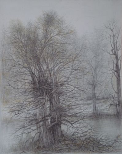 Dimitrina Stamboldjiev Kutriansky S Silverpoint With Colored Pencil Drawing Entwined 22 5 X19 Monochrome Art Silverpoint Drawing Landscape Trees