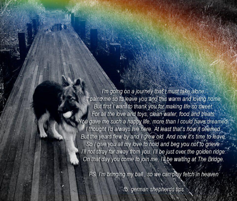 on a journey to the rainbow bridge   Rosie ❤   Pinterest ...