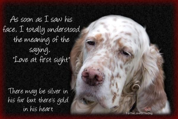 Pin By Melissa Marie On Apollo Flynnie And Angus S Mama Dog Quotes Senior Dog Dog Lovers