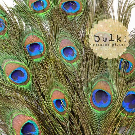 100pcs - Natural Peacock Feathers - bulk, wholesale, wedding party, bridal shower