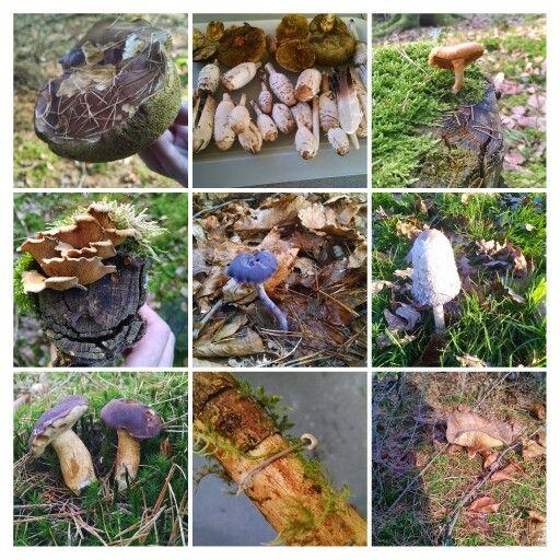 Pilze Collage 2014