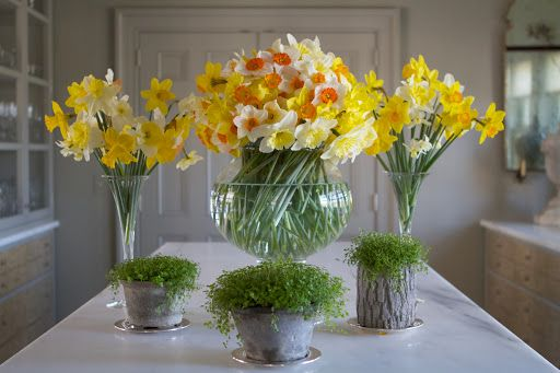 These amazing flower arrangements were created from daffodils picked yesterday at my farm.  Picking this many barely made a dent in the flow...