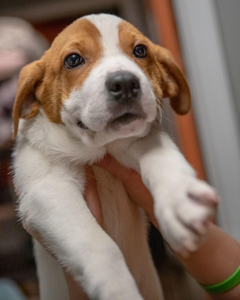 Adopt Chong on Dog adoption, Help homeless pets, Dog mixes