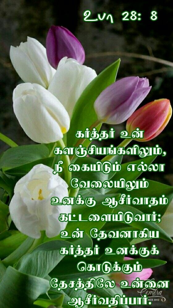 Idea by Tamil mani on Tamil Bible Verse Wallpapers Bible