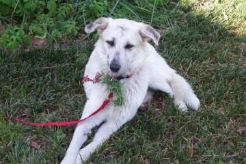 Adopt Rose A Lovely 2 Years Dog Available For Adoption At Petango