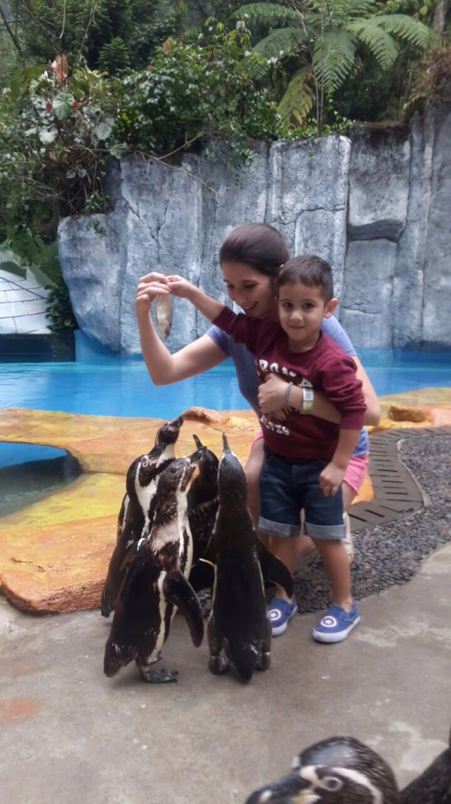 My sons 1st time feeding these adorable penguins...