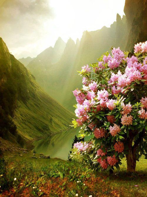 Spring Blossoms, Scotland photo via adriana